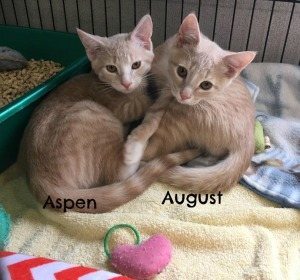 Aspen and August Web 5