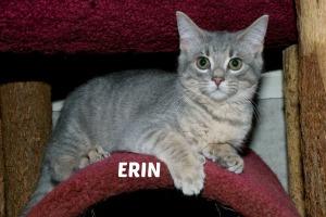 Erin 15 REV