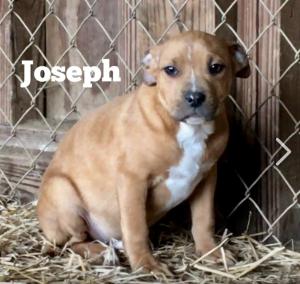 JosephCFC