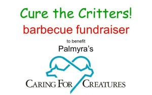 Cure the Critters 2019 final